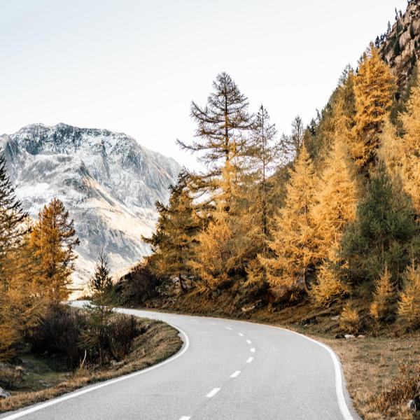 Krebs Forschung: Eine Strasse führt durch einen Herbstwald
