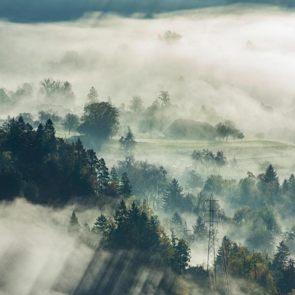 Lungenkrebs Immuntherapie: Ein Wald im Nebel
