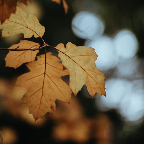 Tumorschmerzen kurz erklärt: Ein Herbstblatt